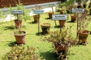 Remèdes ayurvédiques à base d'herbes