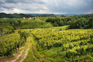 Abano & Montegrotto Terme : la route des vins