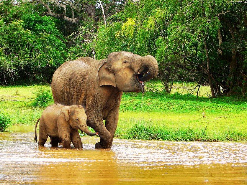 enrichissez-vous voyager au Sri Lanka 7 bonnes raisons - éléphants