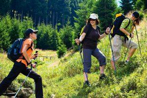 randonnée en pleine nature, forêts et montagnes