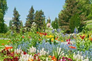 Oberstaufen - Île de Mainau et sa flore